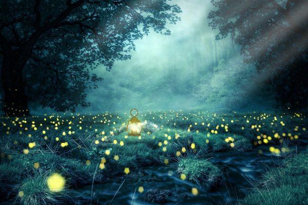 night, forest, glowworm